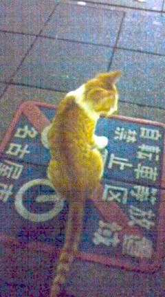 2010年8月25日の携帯写真 まだまだ幼いトラ