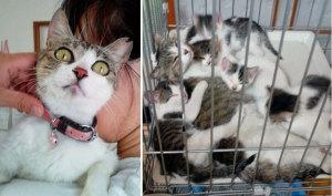 6匹の子猫を産んで育てていた母猫